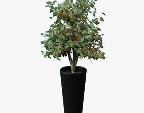 Indoor Plant 3D model PBR