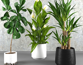 3D model Contemporary house plant set