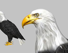 Bald Eagle 3D model rigged