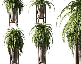3D Fern in pots - 4 models