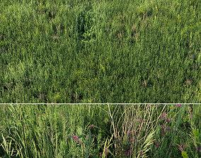 Grass field 01 3D model