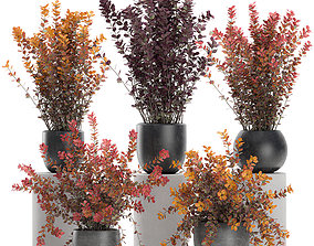 3D Barberry Thunberg in a black pot for the interior 698