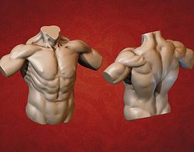 3D print model human Male Torso