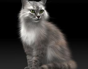 3D model Cat - Hair And Fur