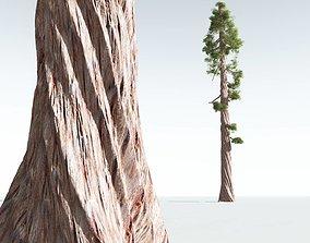 EVERYPlant Coastal Redwood 08 --12 Models--