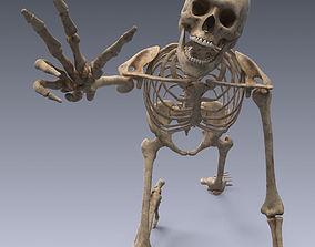 3D asset Human skeleton rigged