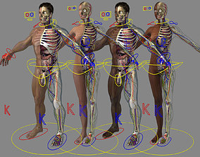 3D model Ultimate Rigged Anatomy Combo