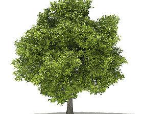 Avocado Tree with Fruits tree 3D