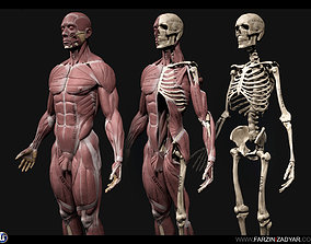 3D asset realtime Human Anatomy Kit