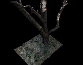 3D 3dscanned Big Tree