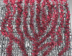 Wild Wine Vine - Autumn - on Gabion Wall 3D model 2