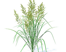 Flowering Grass 3D Model flowering