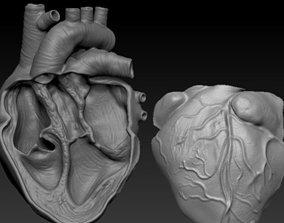3D model ANATOMICAL HEART CUTAWAY