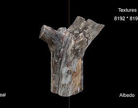 realtime 3D Scan The stump of dry tree