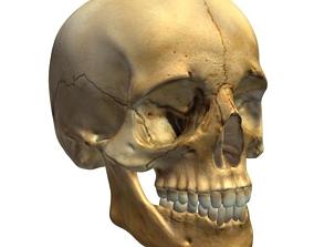 Skull V3 model 3D