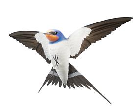 Barn Swallow Hirundo Rustica 3D asset