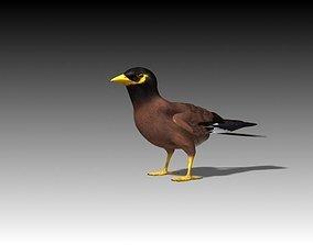 3D asset Maynah Bird folded wings