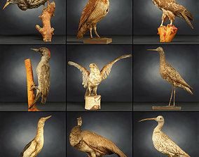 3D model 9 Birds Collection 3