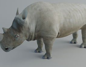 3D asset realtime Rhino other