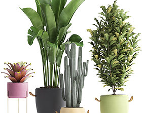 Collection of Exotic Plants 440 3D model
