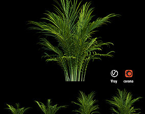 Majesty palm tree 3D model