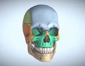 Anatomical Human Skull Sectioned 3D printable model