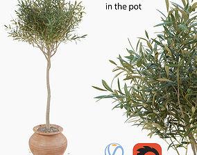 3D model Olive tree in a pot