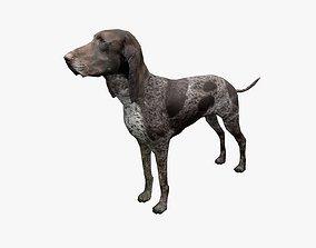 Dog PBR 3D asset