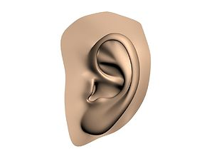 gross-anatomy Human ear 3D