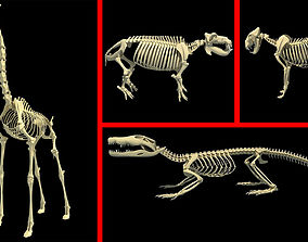 African Animal Skeletons Collection 3D model
