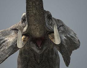 3D model low-poly Elephant-Animated-Maya