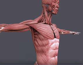 3D model realtime Muscular System