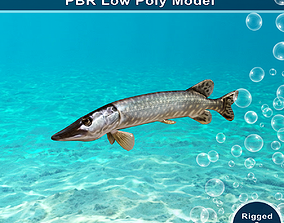 Pike Fish Animated Model 3D asset