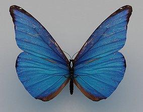 butterfly poly 3D model
