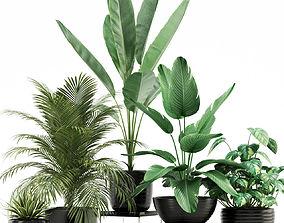 Plants collection 119 3D