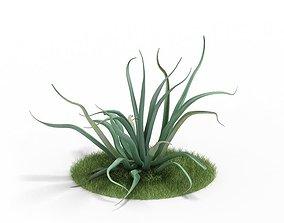 Mature Agave Plant 3D model