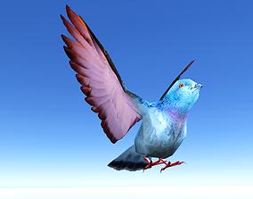Pigeon Bird 3D asset