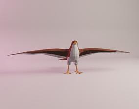 Mildred the Sharp-shinned Hawk 3D model