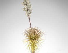3D Soaptree Yucca