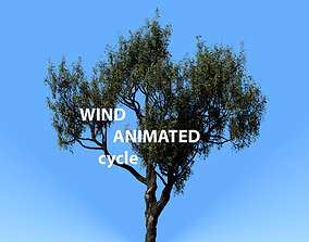 American Chestnut Tree 001 - Wind Animated 3D