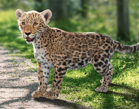 rigged 3D Panthera onca Baby leopard Animated Fur