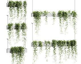 Ivy in hanging flower pots - 5 models 3D