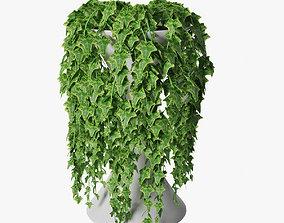 3D model ivy in pot 05