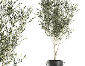 Decorative olive tree in a black flowerpots 648 3D