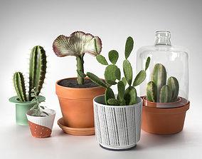 Cactus Plants in Pots 3D model