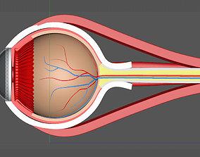 model eyeball 3D model