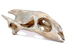 Turtle Skull Realistic 3D asset