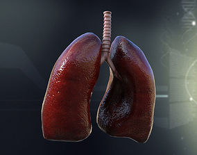 Human Lungs Anatomy 3D model