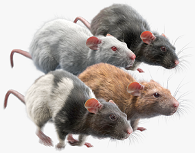Rat Fur Animated Collection 3D