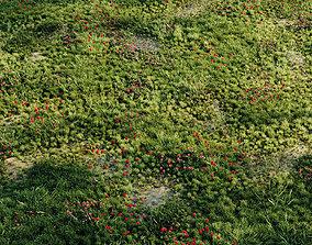 3D model Meadow grass 2